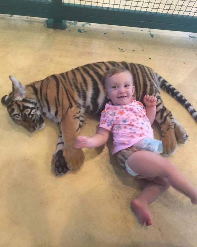 ella_filhote_tigre