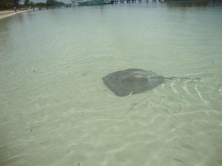 Arraia_Isla Contoy_Cancun