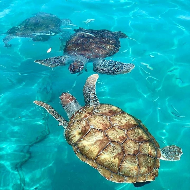 tartarugas_Foto @elynemarith