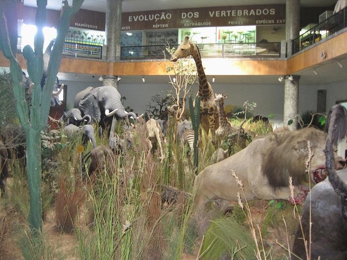 museu de historia natural maputo