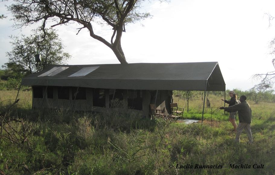 nomad serengeti