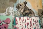 Graffiti tour em Buenos Aires