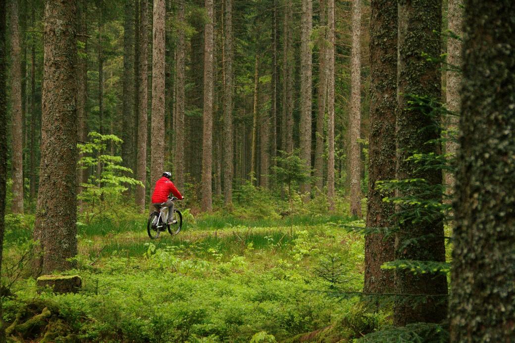 Trilhas para caminhadas e ciclismo são os destaques naturais de Freudenstadt, uma das cidades da Floresta Negra, na Alemanha