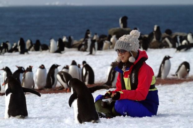 Pinguins em Aitacho Island, Península Antártica (foto: Eduardo Vessoni)