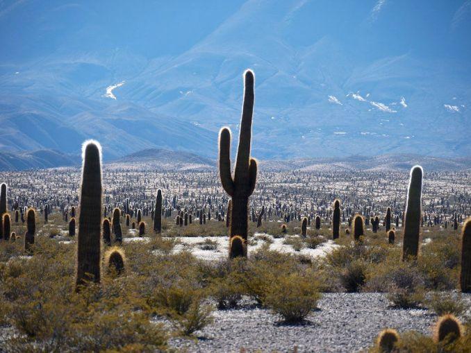 Parque Nacional Los Cardones, no centro oeste da Província de Salta. Esta é uma das atrações com acesso pela Ruta 40 (foto: Jan Hazevoet/Flickr-Creative Commons)