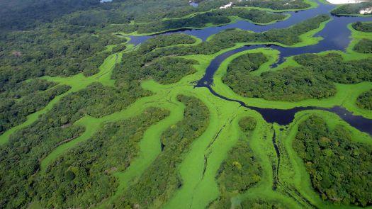 Resultado de imagem para imagens aereas da amazonia