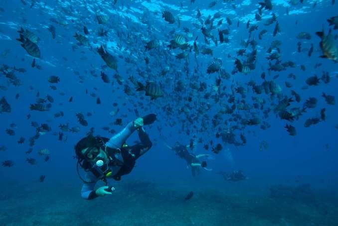 Mergulho em Noronha, onde o mar tem uma das melhores visibilidades do mundo (foto: All Angle/Tati Vasconcelos)