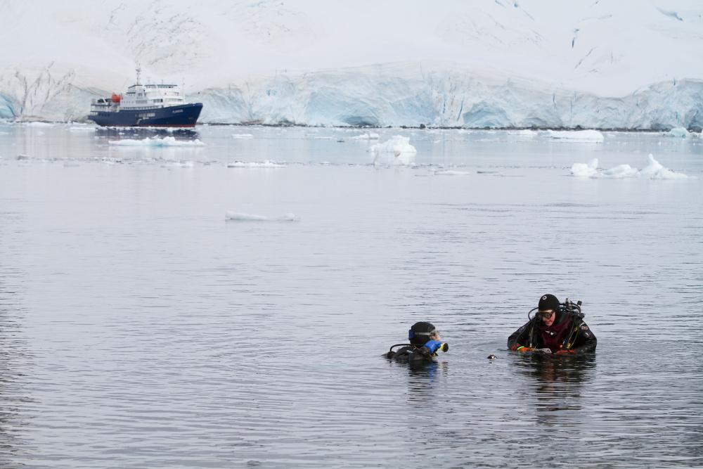 MERGULHAR: A vida marinha é um dos destaques que quase ninguém consegue ver. Paredões de algas, caranguejos, borboletas-do-mar, focas e baleias (essas, sim, costumam se mostrar do lado de fora) são alguns dos animais que podem ser vistos, durante mergulhos em águas antárticas. Em paredes de gelo ou próximo à praia, os mergulhos na Antártica acontecem em águas com até 20 metros de profundidade e a 1°C, o que exige uso de roupa especial, conhecida como dry suite, que permite mergulhar em águas frias (foto: Oceanwide Expeditions/Divulgação)