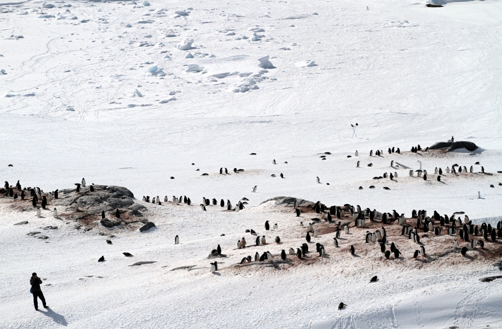 Desembarque em Jougla Point, na Península Antártica (foto: Eduardo Vessoni)
