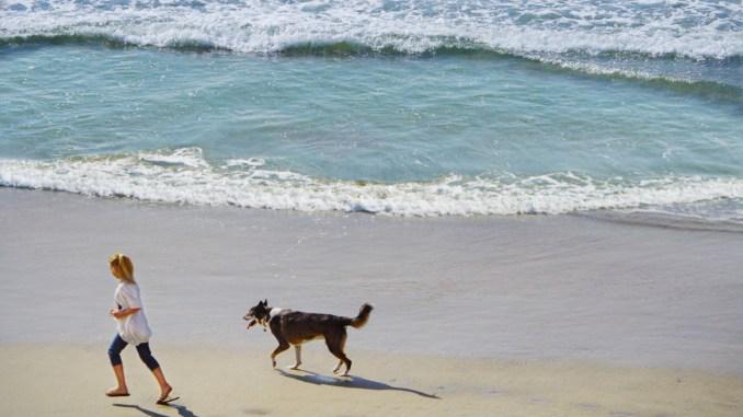 Dog Beach, no Condado de Orange, na Califórnia (foto: Visit Huntington Beach/Divulgação)