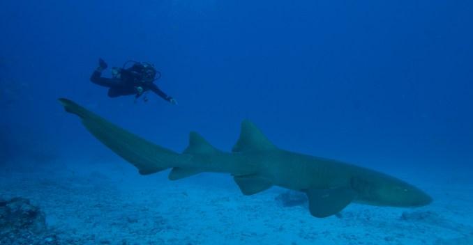 Cabeço Submarino, um dos pontos de mergulho, em Fernando de Noronha (foto: All Angle/Andreza dos Santos)