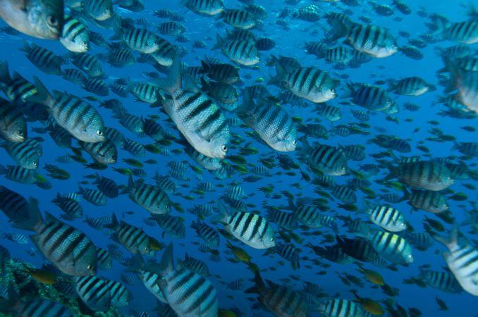 Mergulho avnçado em Iuias (foto: All Angle/Tati Vasconcelos)