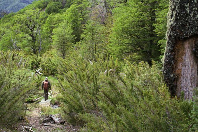 Trilha Fundo la Estrella, na Reserva Nacional Malalcahuello, no sul do Chile (foto: Eduardo Vessoni)