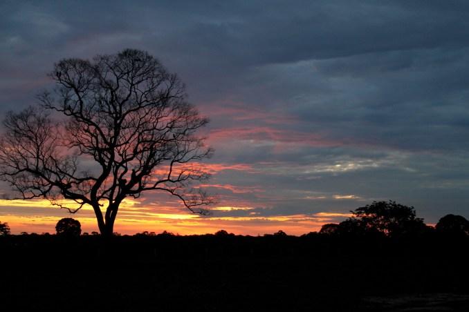 Final de tarde na região do Rio Claro, no Pantanal Norte, no Mato Grosso (foto: Eduardo Vessoni)