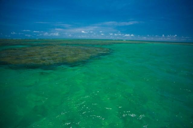 O mar de São Miguel dos Milagres é verde-claro, morno e sem ondas, com os recifes característicos da Costa dos Corais. Há um banco de corais na Praia de Porto da Rua