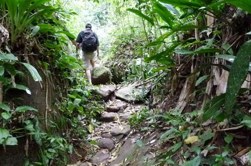 Onde fazer trilhas na floresta sem sair do Estado de São Paulo | Viagem e  Turismo