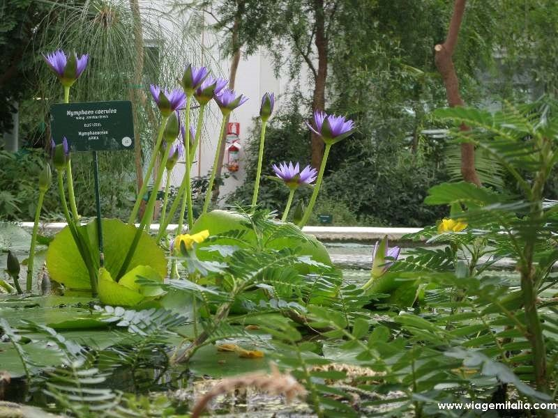 🌱 Horto botânico de Pádua, o jardim botânico universitário mais antigo do mundo