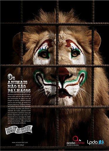 Diga não ao turismo com animais