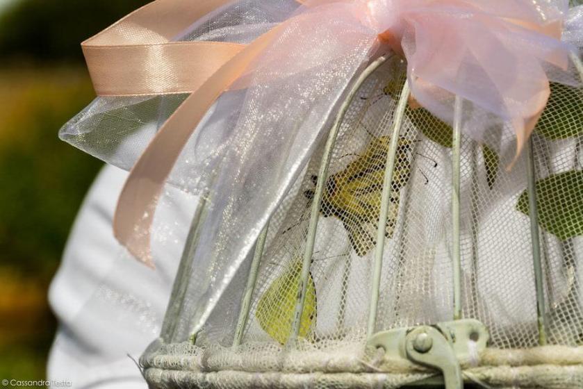 Liberazione delle Farfalle