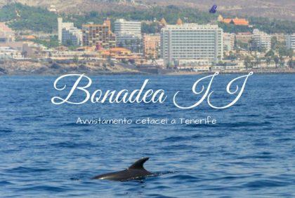 Bonadea II