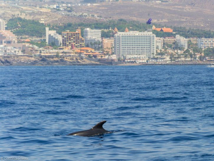 Balenottera avvistata a bordo di Bonadea II