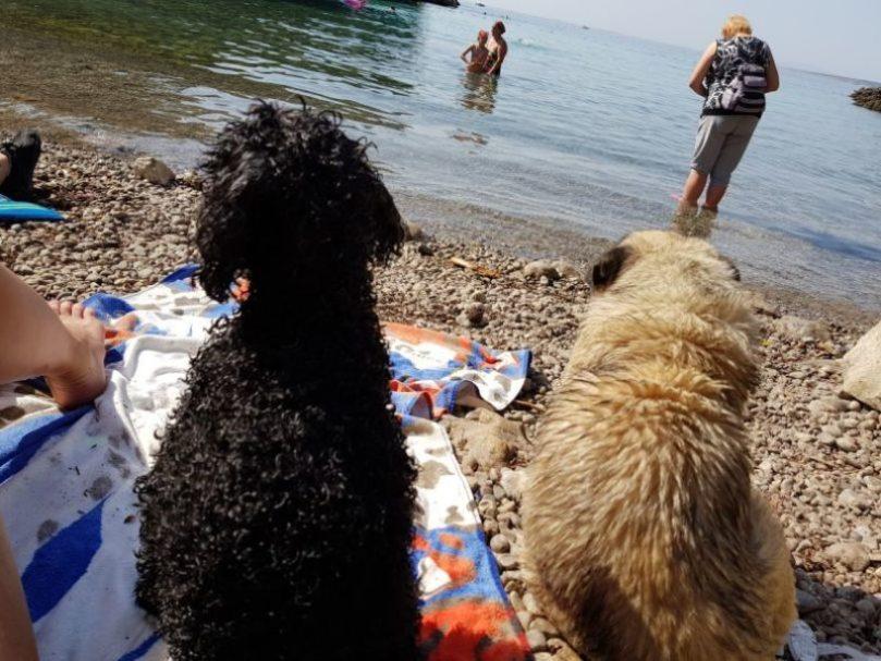 cani-fanno-amicizia-in-spiaggia
