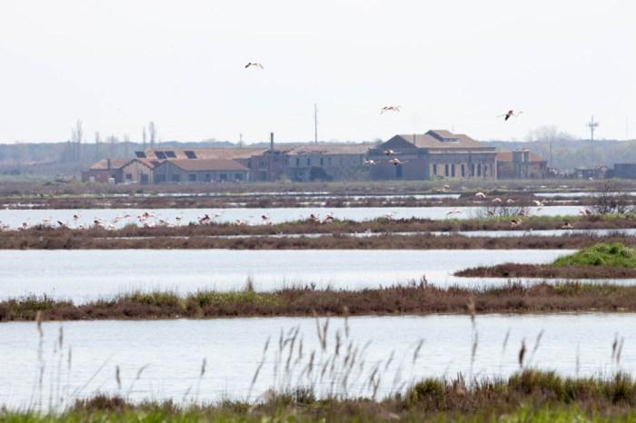 Delta del Po - Terra e acqua I