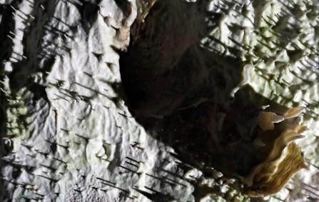 stalattiti chiamati spaghetti all'interno delle grotte di postumia, una delle grotte magiche della Slovenia