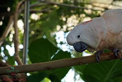 Pappagallo nella biosfera del Porto Antico, incontrato durante la visita all'acquario di genova.