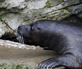 Il fochino pesto durante la nostra visita all'acquario di genova.