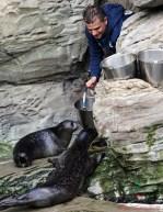 visita all'acquario di genova battesimo di pesto