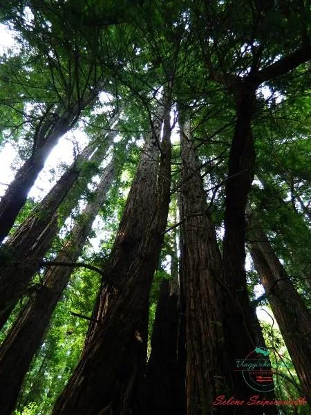 Le sequie gigante di Muir Wood Park a san francisco, una delle mete consigliate per il 2018.