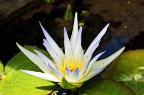 Nell'Orto Botanico di Padova si possono trovare tantissime specie di fiori diversi.