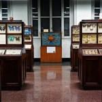 Collezione di insetti del Museo di Storia Naturale Giacomo Doria a Genova.
