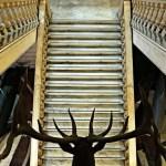 cosa visitare a genova: Il Museo di Storia Naturale Giacomo Doria.