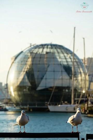 Gabbiani appollaiati sullo sfondo della Biosfera al Porto Antico di Genova.