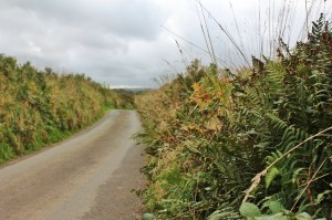 I molto Cornish muri vegetali