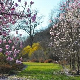 viatori-primavera