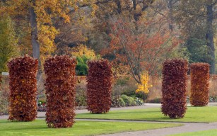 RHS-garden-wisley-in-November