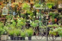 Top-5-markets-provence-flower-market