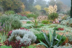 Autumn in the Gravel Garden, The Beth Chatto Gardens