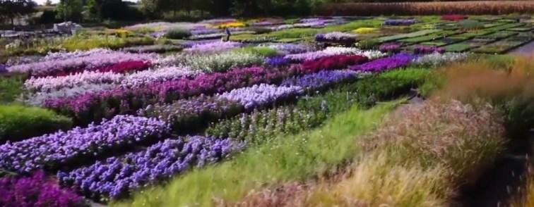 colori-autunno-vivaio-priola