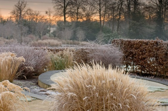 marks260 December . Winter frost . landscape garden . Owners: The Thomas Phillips Price Trust Marks Hall Estate, Coggeshall UK Jerry Harpur