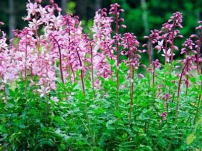 Gita Spensierata tra i fiori del Carso Sloveno