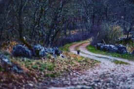 Tomaj woods