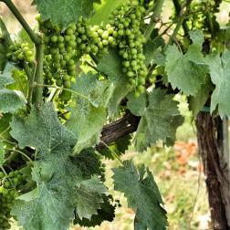 """Settembre è il mese della vendemmia e, da brava amante del vino, non resisto a fargli un """"tributo"""" ricordando le giornate trascorse a Montefalco. Con grande nostalgia e desiderio di un bel bicchiere di Sagrantino."""