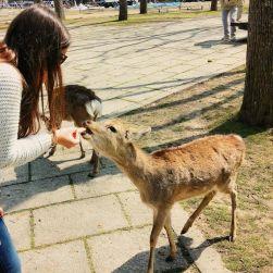I daini di Nara mi hanno fatto sorridere incessantemente. Mi hanno pizzicato i jeans, il parka, la mappa, le dita delle mani. Curiosi e sfrontati, li avrei abbracciati tutti!
