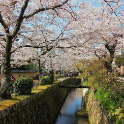 Il Sentiero della Filosofia di Kyoto sembra non finire mai e, in cuor tuo, speri davvero che possa essere infinito. Tutta questa bellezza... è un peccato che finisca.