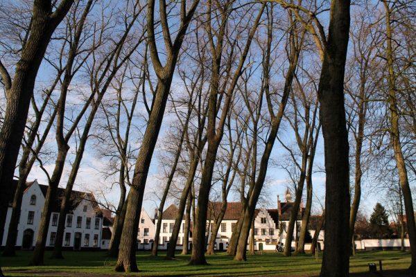 Fiandre - Belgio
