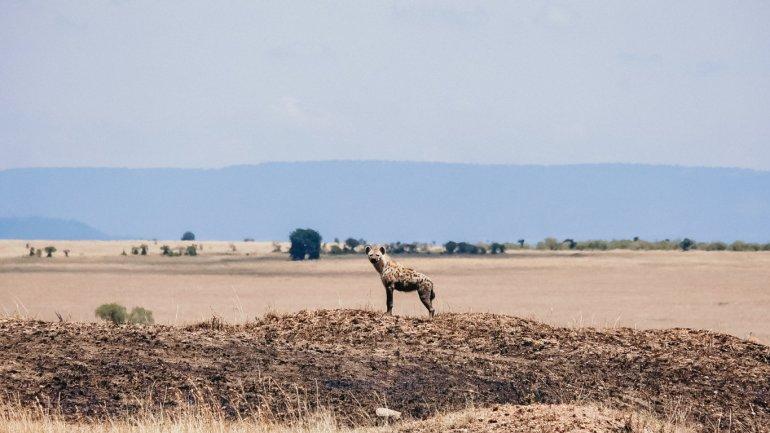 Iena - Masai Mara